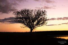 'Anoitecer outonal..' (Suzana Fernandes Fotografia) Tags: sol rio rural sunrise de grande do natureza sombra arvore por sul entardecer aude tupancireta