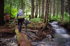 Tree Bridge (michael.veltman) Tags: park bridge tree water river washington little loop north beaver trail national backpacking fallen cascades