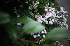 Ricoh GR II : June 9, 2016 (takuhitofujita) Tags: flickr eyefi ricohgrii eyeficloud