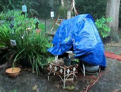 Mo Rain (dog.happy.art) Tags: rain rainy soggy humid swampy enoughalready plantcover