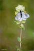 Aporia crataegi warm-up. (valpil58) Tags: macro spring nikon bokeh butterflies 80200mm d600 aporia crataegi