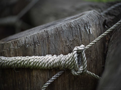 Obstacle detail_c (gnarlydog) Tags: abstract texture closeup log australia rope knots shallowdepthoffield wooddetail adaptedlens cinelens horsejumpingcourse kodakcineektanon102mmf27