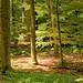 Mittsommerwald - Midsummer Forest I