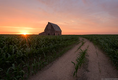 The Drive Home (Erik Johnson Photography) Tags: sunset sky sun green abandoned lines barn gold golden corn midwest nebraska farm united country farming crops states prairie agriculture leading seward goldenhour soybeans