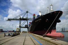 Celina Star (DST_1359) (larry_antwerp) Tags: 9210086 celinastar cmacgm psaterminal container antwerp antwerpen       port        belgium belgi          schip ship vessel