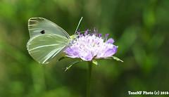 _DSC2782r2 (tonomf) Tags: naturaleza verde 35mm nikon flor desenfoque mariposa nikond5100