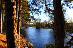 (Jelena1) Tags: trees winter naturaleza tree nature water pine ro canon river landscape vinter agua eau wasser sweden hiver schweden natur paisaje rivire rbol invierno sverige paysage fluss landschaft arbre zima priroda vatten baum trd voda suecia conifer norrland landskap sude drvo reka flod gstrikland drvece svedska mackmyra gavlen valbo canonefs1855mmf3556is gvleborgsln gvlen canon600d gvlekommun canoneos600d gvleborgcounty gvleriver mackmyrabruk