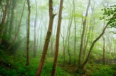 Spring woodland 3 (J C Mills Photography) Tags: wood uk morning trees england mist green leaves woodland landscape spring dale derbyshire peakdistrict fresh darley matlock