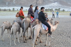 riders (sootix) Tags: sand camelride bactriancamel