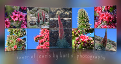 Tower of Jewels (Kurt S. Photography) Tags: tenerife teneriffa caadas picodelteide towerofjewels echiumwildpretii teidenatternkopf