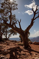 Arizona (Ugo Souza) Tags: arizona tree grandcanyon desertview
