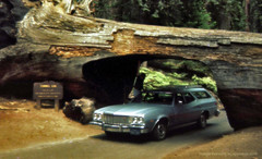 Tunnel of Wood (epiclectic) Tags: california tree station wagon found others photos tunnel snapshots redwood peopleidontknow imagenhancingbyepiclecticcom