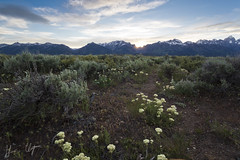 The Grand Tetons 3 (Harris Clayton) Tags: trip travel sunset sky mountain beautiful bush sage adventure journey experience harris wyoming grandtetonnationalpark harrisclayton