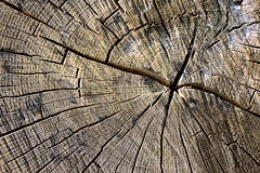 (Mimadeo) Tags: life wood old brown abstract tree texture nature closeup forest circle wooden saw log pattern cross natural cut timber background surface ring bark slice trunk weathered material treebark organic shape aging plank section cracked cortex concentric striped lumber textured