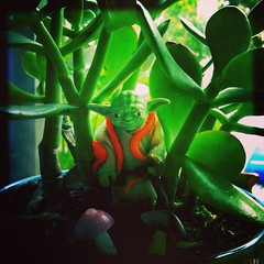Dagobah Days (8 Skeins of Danger) Tags: starwars succulent yoda orangesnake 8skeinsofdanger uploaded:by=flickrmobile flickriosapp:filter=original