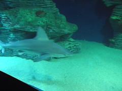 Acquario Valencia - Agosto 2013 (Maurizio Rusconi) Tags: valencia aquarium acquario oceanografic