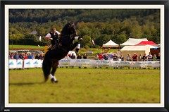 Hippologie - Journe du cheval de trait - Aucun (65) (Vasnic64) Tags: cheval 65 chevaux vasse percheron cavalerie aucun hautepyrnes