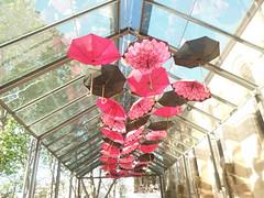 THE UMBRELLAS OF PADDINGTON (RubyGoes) Tags: trees sydney australia nsw paddington umbrellas addington unitingchurch mbrellas unitingchurchsp