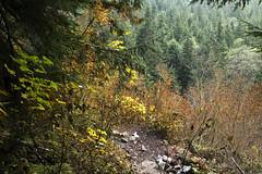 Lake Serene Hike (angelatravels11) Tags: autumn trees mountain lake mountains tree fall fog moss day mt hiking hike mount trail cascades serene index dayhike lakeserene mtindex