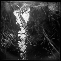 Trees That Fell Down In The Storm (robert schneider (rolopix)) Tags: trees light blackandwhite bw blur 120 film monochrome analog mediumformat square shadows 4x4 connecticut toycamera roots newengland ct morris dianaclone expired ilford plasticcamera outdated conn panf fallentrees markl outofdate panfplus 120620 robertschneider autaut bwfp believeinfilm rolopix treesthatfelldowninthestorm