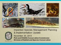 Imperiled Species Management Update (MyFWCmedia) Tags: florida wildlife conservation commission weston fwc westonflorida commissionmeeting floridafishandwildlife myfwc myfwccom myfwcmedia