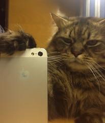 humorscene.tumblr.com (Johnypf) Tags: pictures girls pets cute animals fun pics lol humor wtf picdump