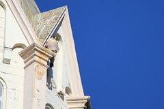 Peregrine Falcon Perched 3 (fredhosley) Tags: november bird church nature canon ma wildlife massachusetts raptor 7d falcon mass peregrine haverhill 2013 100400mml