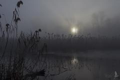 Nebbie mattutine all'oasi [Explored] (_milo_) Tags: italy canon landscape eos paesaggio oasi angera 18135 itaia 60d bruschera