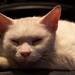Good luck cat having a rest