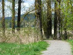 13309 (Refuge Stewards) Tags: scenery photocontest share steigerwald cgrs columbiagorgerefugestewards