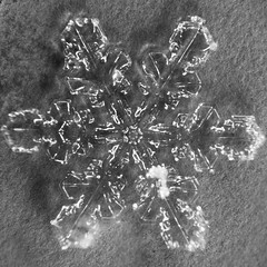 2014021514-144118398-Edit.jpg (Steven Ellingson) Tags: snowflake christmas blue winter hairy white holiday snow abstract cold detail macro ice nature wet water glass beautiful weather closeup season star frozen miniature cool shiny frost december pattern close natural crystal background year flake frosty fresh ornament freeze single micro melt transparent icy shape isolated textured freshness frosted