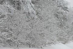 Hiver sur l'Aigoual (Michel Seguret Thanks all for 8.400 000 views) Tags: schnee winter white mountain snow france cold blanco berg forest montagne season nikon hiver selva neve invierno neige montaa kalt blanc froid frio fort gard d800 saison weis inverna michelseguret