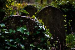 Highgate Cemetery (PhotographyWren) Tags: cemetery graveyard highgate highgatecemetery