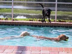 Dog Day Afternoon 025 (n.coryell) Tags: dogdayafternoon