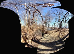 IMG_1995iPH5  Trees © 2014 Paul Light (Paul Light) Tags: trees autostitch arlington massachusetts arlingtonreservoir