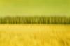 р о щ а (neamoscou) Tags: art film analog freedom flickr pentax grain inspired slide x slidefilm retro indie nophotoshop expired analogphotography alternative facebook nopostproduction noediting diafilm diapo τέχνη 写真 alternativephotography filmphotography عکاسی هنر inconnu taide 藝術 فن 影相 芸術 slowfilm 예술 古着 ศิลปะ independentphotography tumblr छायाचित्र कला 사진술 lowspeedfilm ফটোগ্রাফি صوير শিল্প การถ่ายภาพ ஒளிப்படவியல் ხელოვნება sergeyneamoscou heisnotcomingbackgetoverit ਕਲਾ