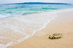 沙滩边的珊瑚 | Coral on the Beach (Owen Wong (Thank you)) Tags: ocean sea beach coral landscape island asia philippines shell boracay sands 风景 海洋 大海 亚洲 沙滩 珊瑚 菲律宾 岛屿 长滩岛 贝壳沙滩
