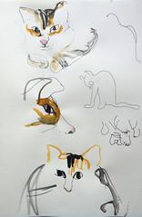 bob (maartje jaquet) Tags: home pen ink cat watercolor sketch kat drawing bob sketchbook kater aquarel tekening schets schetsboek waterverf