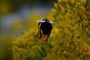 Wings (dingmank13) Tags: bee beeinflight beemacro beewings beebokeh