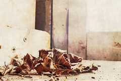 on the shelf (aimeeern) Tags: winter window leaves garage fujifilm february textured odc ourdailychallenge x100s