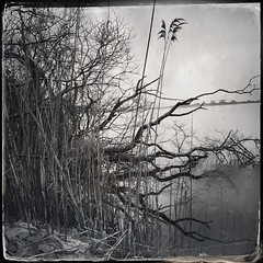 #sea #grass #winter #tintype #blackandwhite #nature (Lisa Cohen Photography) Tags: winter sea blackandwhite nature grass tintype