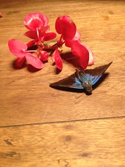 Beautiful night moth, bringing us a message, to make us aware of what we are doingWhat message does it brings this for you? #messengerofgod #butterfly #colors #beauty #love #grace #flowers #grace #peace #unique #soulriser #shine #light #joy #exotic #lovet (umalighthorse) Tags: flowers light love colors beauty butterfly peace shine unique joy grace exotic lovethis messengerofgod soulriser