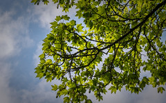 G70_160503_Wald_0001_b (Urban Points Of View) Tags: wald bltter baum frhling