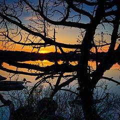 Storavatnet, Norway (Vest der ute) Tags: sunset tree norway rogaland waterscape fav25 g7x ryksund
