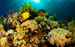 Underwater sea creatures and other animals Wallpapers | SEA LIFE Adventure Backgrounds - Part 2 (PhotographyPLUS) Tags: pictures graphics photos illustrations images stockphotos articles footage stockimage freephoto stockphotograph