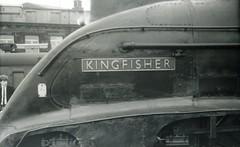 img604 (OldRailPics) Tags: newcastle steam kingfisher british locomotive railways 60024