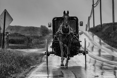 Amish Buggy (Rami Khanna-Prade) Tags: pennsylvania amish lancastercounty buggy countrylife horseandbuggy amishcountry horsenbuggy
