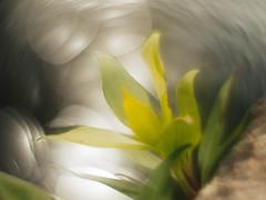Riverside (i-r-paulus) Tags: wonderful river weird experimental dof bokeh sparkle odd helios buckfastleigh experimentalphotography mardle russianlens helios442 sovietlens adaptedlens swirlybokeh adaptedhelioslens
