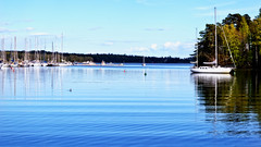 Pikku Kallahti (Jori Samonen) Tags: trees sea bird water animal marina finland boats bay helsinki shore vuosaari pikku kallahti
