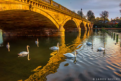 Swans on the Serpentine (James Neeley) Tags: london swans hydepark serpentine jamesneeley
